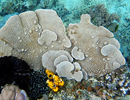 Sponges as biomonitors of micropollution