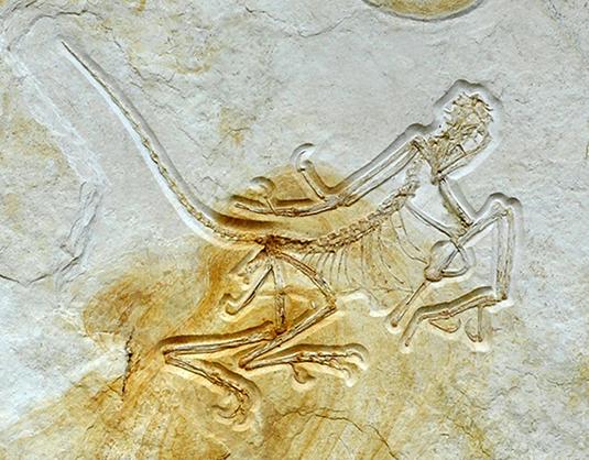 archaeopteryx_535