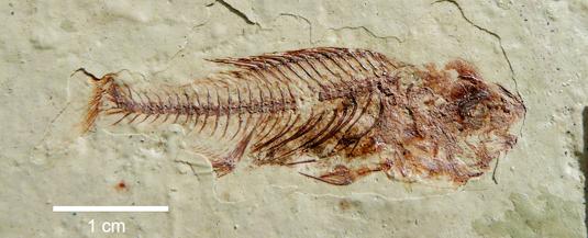 fishfossil