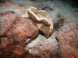 steinschwamm1